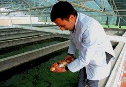 Qapalı və açıq balıqyetişdirmə laboratoriyası